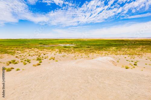 Close-up photo of desert oasis scenery Fotobehang