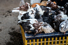 Pigeons For Sale At A Food Mar...