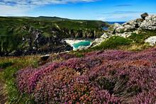 Coastal Landscape, Cliff View, Beautiful Gorse
