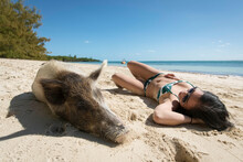 Young Woman Relaxing By Pig At Beach On Sunny Day