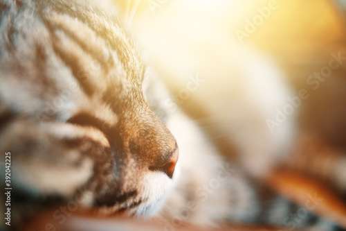 Photo Muzzle of a gray striped domestic cat close-up