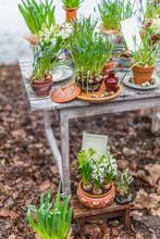 Muscari, Hyacinths And Crocuse...