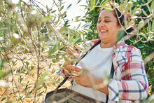 Mature Lady Picks Olives From ...