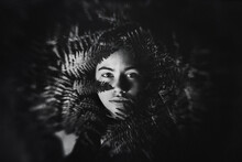 Girl Lying In The Ferns