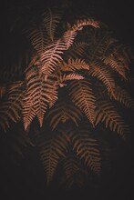 Brown  Fern Leaves In Autumn S...