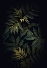 Green Plant Leaves In The Gard...