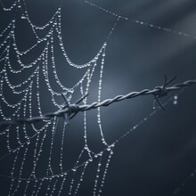 Raindrops On The Spider Web In...