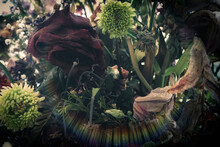Bouquet Of Withered Flowers Su...
