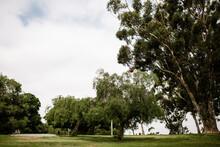 Landscape Shot Of Trees At Park