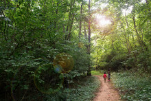 Kids Walking On A Hiking Trail In The Forest