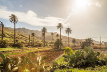 Landscape With Palm Trees In Vega De Rio Palmas In Fuerteventura, Canary Islands, Spain.