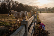 Little Girl Playing Near Horses Fenced In Pasture