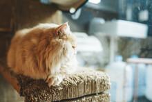 Cat In A Cat Cafe