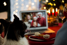 Mature Man Celebrating Christmas With His Dog Sitting At Served Holiday  Table With Laptop. People Greeting Their Friends On Video Call Using Webcam. Christmas Eve Online. New Normal Social Distancing