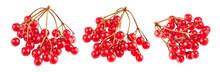 Red Berries Of Viburnum (arrow...