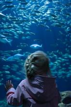 Young Girl Watching Fish Swimming In A Big Aquarium In A ZOO.