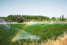 Sprinklers Forming A Rainbow I...