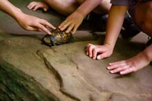 Close-up Of Children Reaching ...