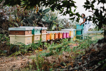 Young Woman Beekeeper At Work ...