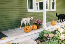 Two Dogs Walking On A Porch De...