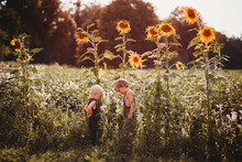 Children Facing Each Other In A Field Of Tall Sunflowers At Sunset