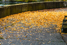 Beautiful Autumn Path On A Sun...
