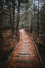 Old Wooden Boardwalk Through Ancient Forest Baxter State Park, Maine