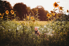 Young Boy Looking Small Among Tall Sunflowers In Field On Sunny Day