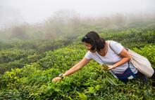 Woman Picking Wild Strawberrie...