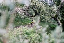 Beautiful Hiding View Of Far Away Kid Hiking Thru A Big Forest