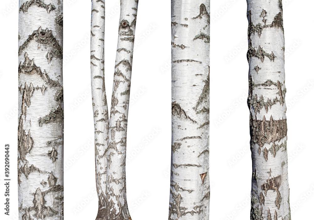 Fototapeta set of natural birch trunks isolated on white background