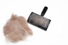 Photo Of Brush For Combing Dog...