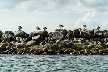 Seagulls Sitting On A Jetty As...