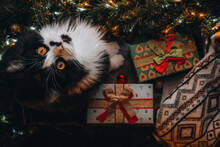 Funny Black Cat On Window Sill Under Christmas Tree Look Into Camera. Xmas Flatlay, Red Gift Presents Box, Ornaments Home. Wallpaper, Postcard Greeting. Merry Christmas And Happy New Year. Top View.
