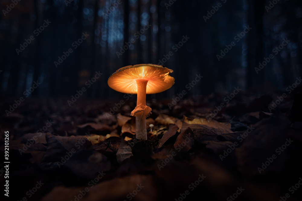 Fototapeta Almost like fairytale forest. Dark, gloomy and magical with a glowing mushroom, fungus. Autumn in the forest is always magical, in any weather and time of the day.