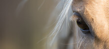 Horse Head  Banner Close Up Portrait Of A Horse - Eyes Shut - Relaxed - American Quarter Horse