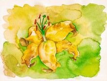 Portrayal Of A Yellow Flower In Yellow And Green Background. Watercolor Painting.