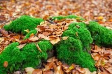 Closeup Of Fallen Yellow Leave...