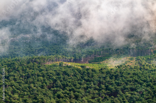 Thick green forest on a hillside in the evening fog Canvas Print