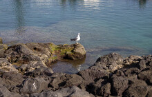 High Angle Shot Of A Seagull P...