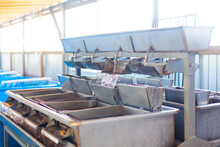 Fish Egg Hatchery. Baby Eggs B...