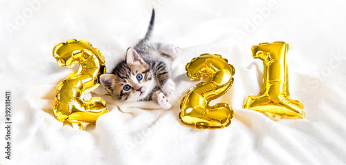 Christmas cat 2021. Kitty with gold foil balloons number 2021 new year. Striped kitten on Christmas festive white background.