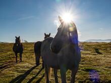 Free Horses In A Farm Yard