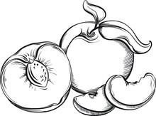 Peach. Hand Drawn Fruit. Sketch Vector Illustration