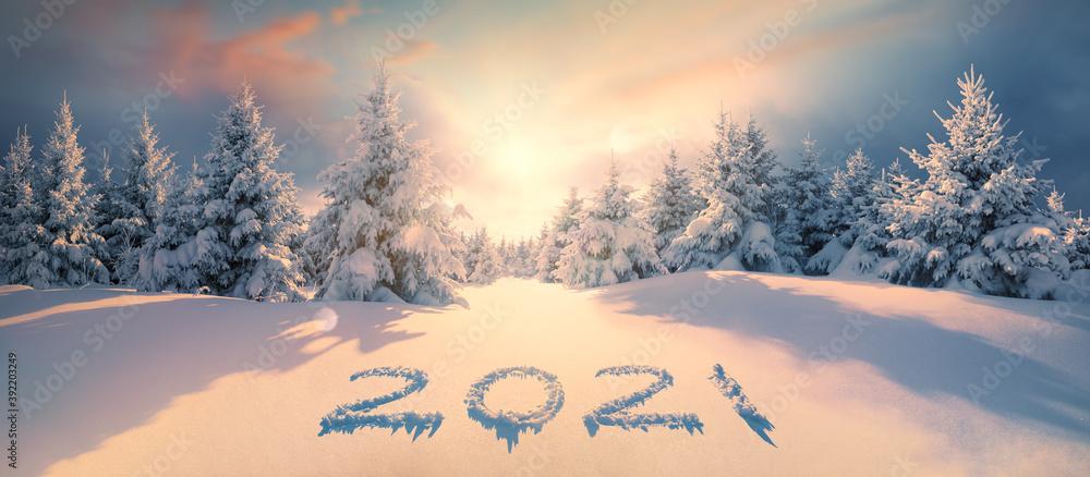 Fototapeta 2021 on snow in winter forest