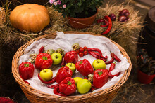Autumn Decor With Natural Straw Bale, Pumpkin, Apples, Peppers And Old Wooden Barrels. Harvest And Garden Outdoor Decorations For Halloween, Thanksgiving, Autumn Season Still Life. Fall Composition.