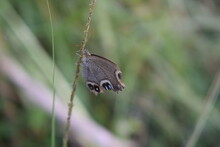 Worth To See The Gray Butterfly Playing On Portrait Photo