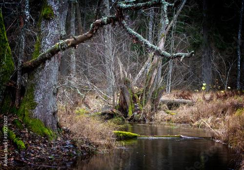 Papel de parede Flowing creek in forest landscape