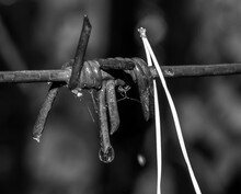 Steel Barbed Wire On Dark Back...