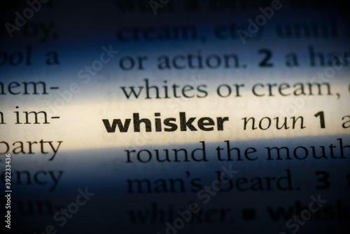 Cuadros en Lienzo whisker